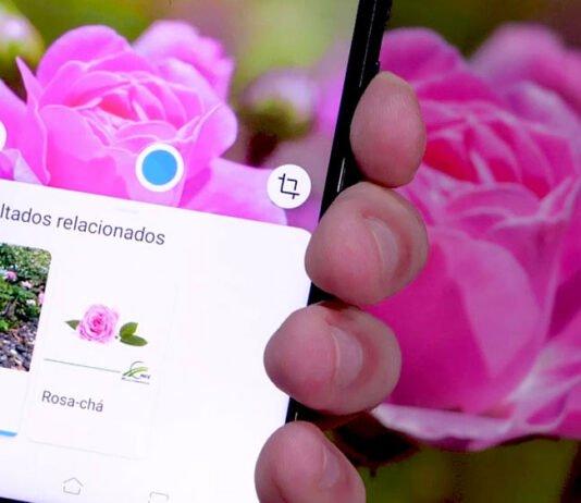 google_lens_plantas